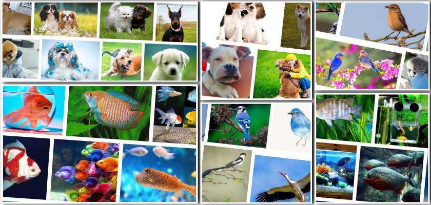 Köpekler İçin Hangi Mama Ve Su Kapları Tercih Edilmeli?