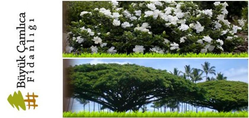Bahçelerinizi ya da Evlerinizi Korumak Doğal Ortamlar